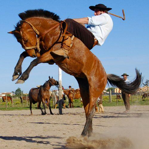 Man holding onto horse - Winter - Blog